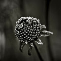 winter seed head